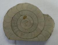 Zkamenělá lastura