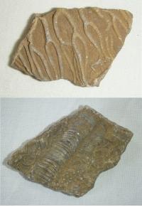 Kámen se zkamenělinami